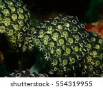 a close up photo of coral | Shutterstock . vector #554319955