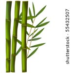 bamboo isolated on white... | Shutterstock .eps vector #55432507