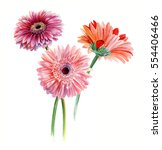 Bouquet Of Three Gerberas....