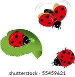 cute vector lady bugs