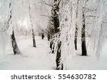 Beautiful Birch On A Frosty...