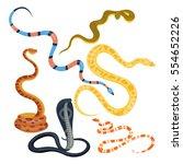 snake reptile cartoon vector...   Shutterstock .eps vector #554652226