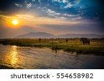 elephants in lower zambezi... | Shutterstock . vector #554658982
