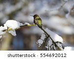 Hummingbird On A Snowy Branch...