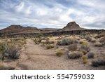 Cholla Cactus Garden In Mojave...