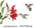 Ruby  Throated Hummingbird Pai...