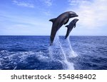 beautiful dolphins swimming.... | Shutterstock . vector #554848402