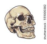 anatomic grunge skull vector... | Shutterstock .eps vector #555000382