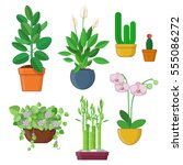 set of house plant and flowers... | Shutterstock .eps vector #555086272