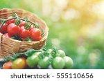 group of tomato blur bokeh...   Shutterstock . vector #555110656