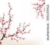 blossoming branch of sakura  ... | Shutterstock .eps vector #555155422