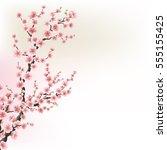 blooming cherry blossom... | Shutterstock .eps vector #555155425