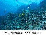 abstract underwater scene of... | Shutterstock . vector #555200812