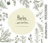 herbs and flowers painted green ... | Shutterstock .eps vector #555225082