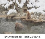 Japanese Snow Monkey Soaked In...