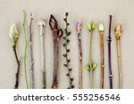 spring buds. | Shutterstock . vector #555256546