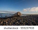 arctic spring | Shutterstock . vector #555257935