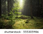 enchanted forest | Shutterstock . vector #555305986