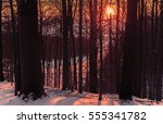winter sunset behind the forest ... | Shutterstock . vector #555341782