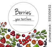 berries and leaves. wild... | Shutterstock .eps vector #555350932