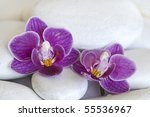pink orchid on white pebble | Shutterstock . vector #55536967