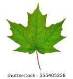 Sugar Maple Leaf  Acer...