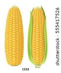 ripe corn on the cob. design...   Shutterstock .eps vector #555417526