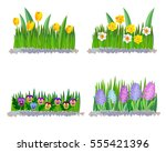 Spring Flowers Tulips And...
