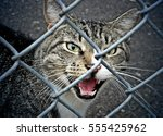 Cat Meow  Behind Fence