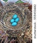 Robin\'s Nest