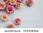 beautiful flowers background... | Shutterstock . vector #555458566