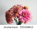 beautiful flowers background... | Shutterstock . vector #555458812