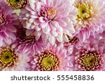 beautiful flowers background... | Shutterstock . vector #555458836