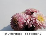 beautiful flowers background... | Shutterstock . vector #555458842