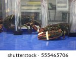 Fresh Seafood Lobsters At The...