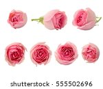 Stock photo set of pink rose flowers isolated on white 555502696
