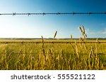 Dry Prairie Grass Or Wild Whea...