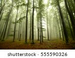 Small photo of Foggy Forest