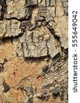 Small photo of Selective focus to surface of Samanea saman or Albizia saman (Tree names).