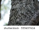 old tree | Shutterstock . vector #555657616