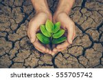 hands holding a tree growing on ... | Shutterstock . vector #555705742