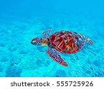 digital illustration   sea... | Shutterstock . vector #555725926