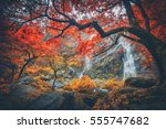 khlong lan waterfall the... | Shutterstock . vector #555747682