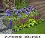 a modern environmental garden... | Shutterstock . vector #555819016