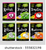 set of colorful labels in... | Shutterstock .eps vector #555832198