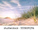 sandy beach on a sunset in... | Shutterstock . vector #555839296