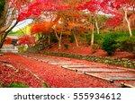 japan autumn. kyoto bishamon do ... | Shutterstock . vector #555934612