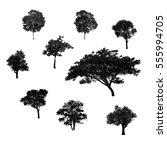 black tree silhouettes on white ... | Shutterstock . vector #555994705