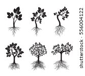 set black trees with roots.... | Shutterstock .eps vector #556004122