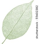 vector leaf isolated | Shutterstock .eps vector #55602382